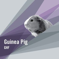 TROVET Guinea Pig | GHF