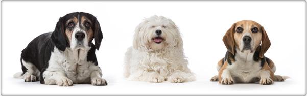 TROVET dietvoeding voor honden
