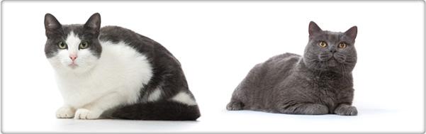 TROVET dieetvoeding voor katten