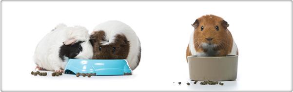 TROVET guinea pig