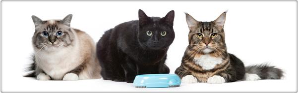 TROVET hypoallergene dieetvoeding voor katten