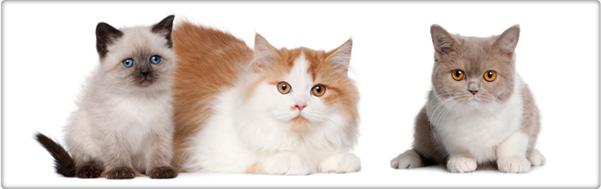 TROVET onderhoudsvoeding voor katten