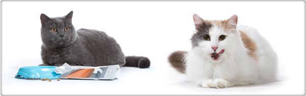 TROVET verantwoorde beloning voor katten